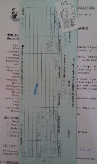 Москва. Метис боксера Рой. 14 лет. Выгнал хозяин. B7b7e37ad593