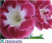 Семена глоксиний и стрептокарпусов почтой - Страница 10 1a9297a0e200