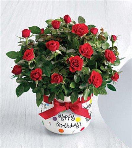 Поздравляем с Днем рождения !!! - Страница 6 200b7d3b531d