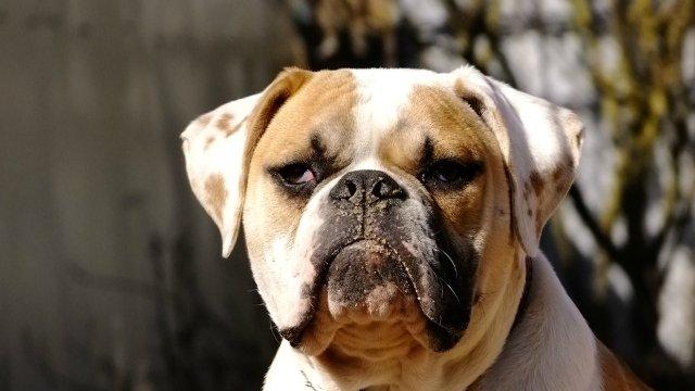 Собаки питомника Carpen Diaz - Страница 2 Aa044016d3f9