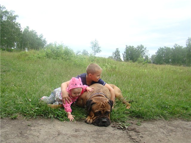 "Фотографии ""Бульмастиф и дети"" - Страница 6 4010eeb4a347"
