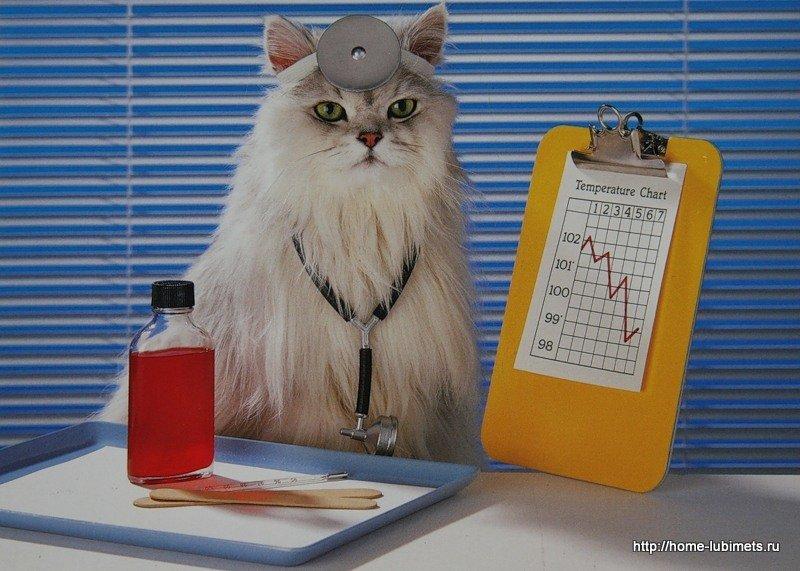 Кошка-лучший доктор (Фелинотерапия) 66cf022bf029