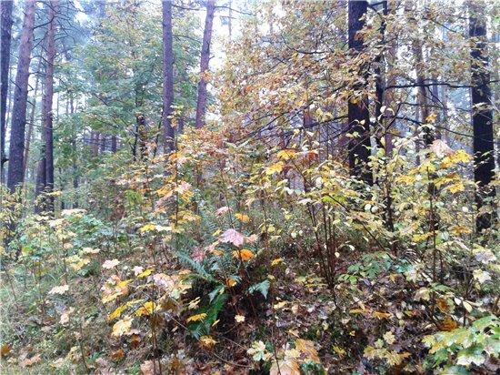 Осень, осень ... как ты хороша...( наше фотонастроение) - Страница 5 E57bb4c78984