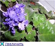 наши домашние цветники - Страница 2 445303ab3607t