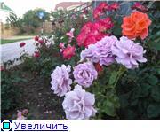 наши домашние цветники - Страница 2 C09b61c17f41t