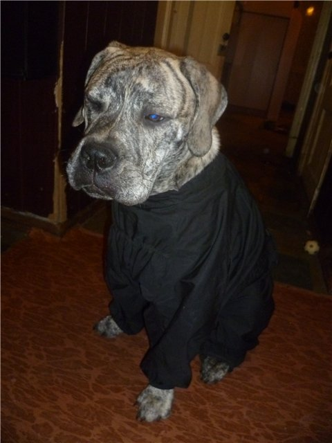 Обязательный минимум для содержания собаки (амуниция) 393a0cf1e946
