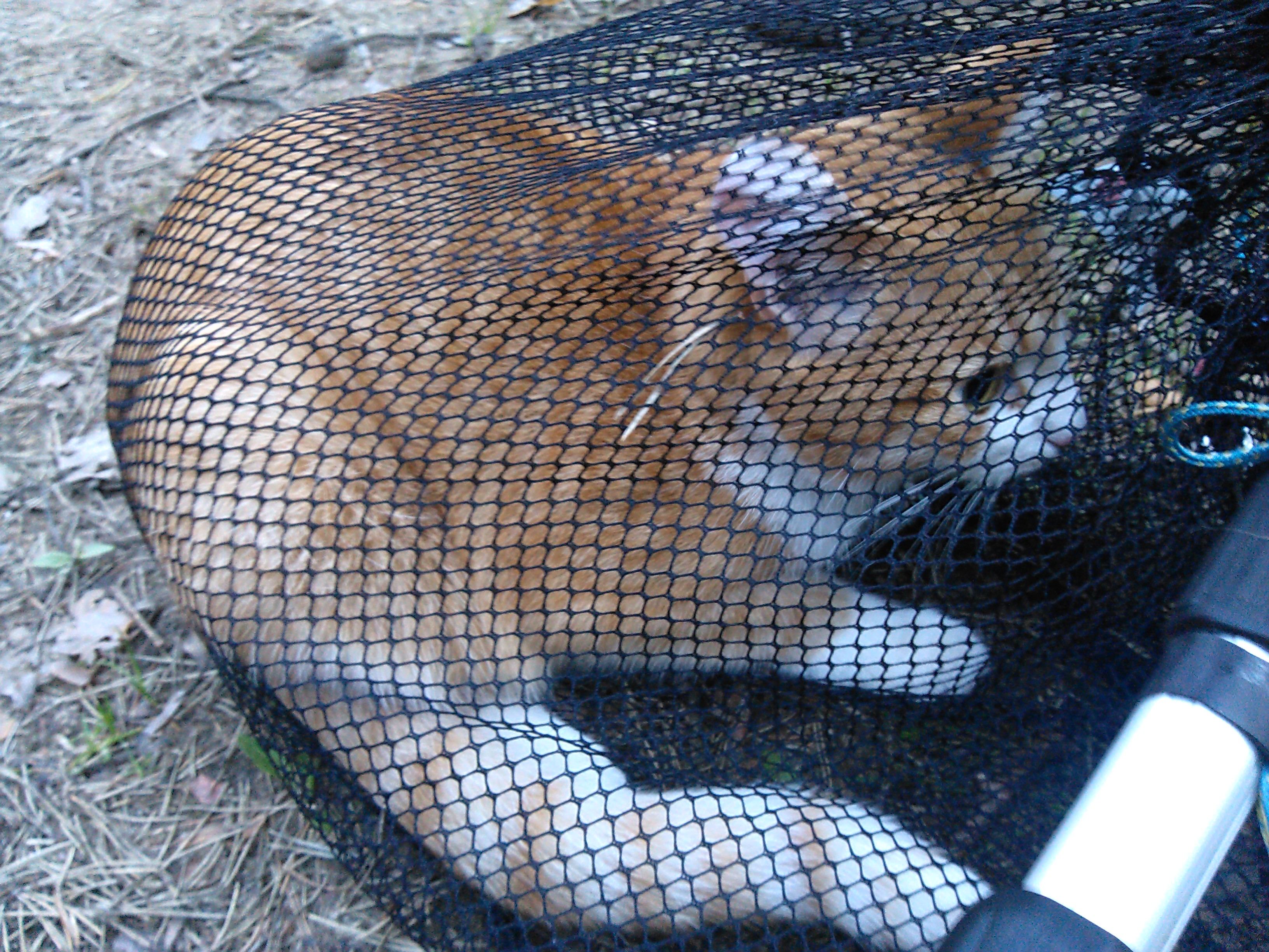 Кот на сосне, Токсово (вызов 599) 10b87b38a7c3