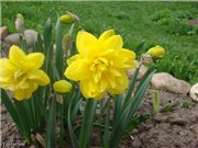 Весна идёт... - Страница 2 7a85cefc9610t