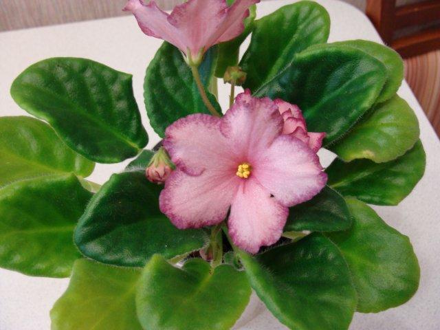 Мои цветочки - Страница 13 90260c47e931