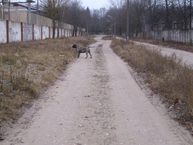 Собаки Татьяны Моисеенковой, кот Мензурка - Страница 3 Faf9b7101b4a