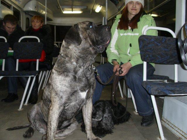 Собаки Татьяны Моисеенковой, кот Мензурка - Страница 3 99b362f0da2f