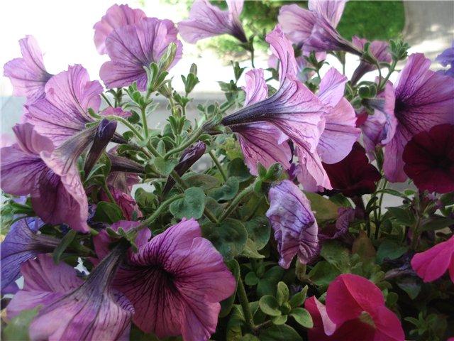Цветы на балконе A972fde84086