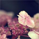 Аватары с цветами 4680aac05396