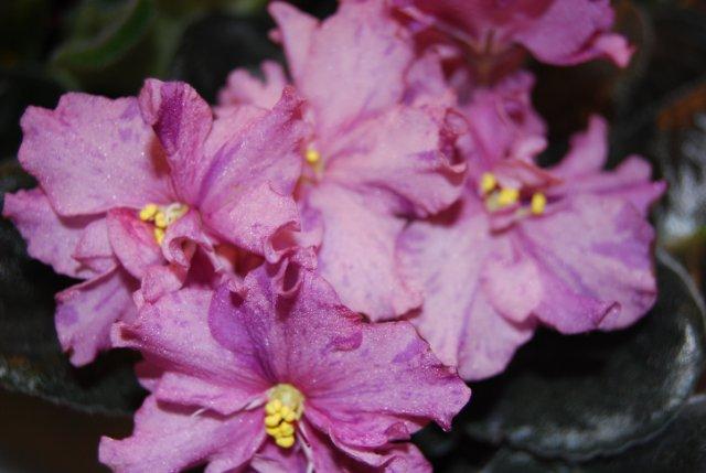 Международая выставка «Цветы.Ландшафт .Усадьба 2010» Астана - Страница 3 5a34cdc946a3