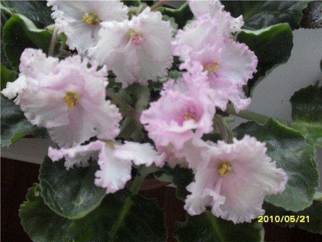 Мой маленький садик 589ffb6eb2da