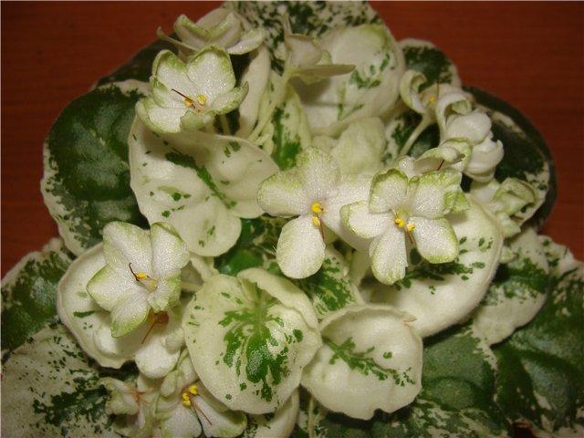 Весеннее  цветение (Хваст от Веры) - Страница 2 15748b023799