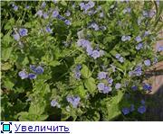 Лето в наших садах 315e0a760335t