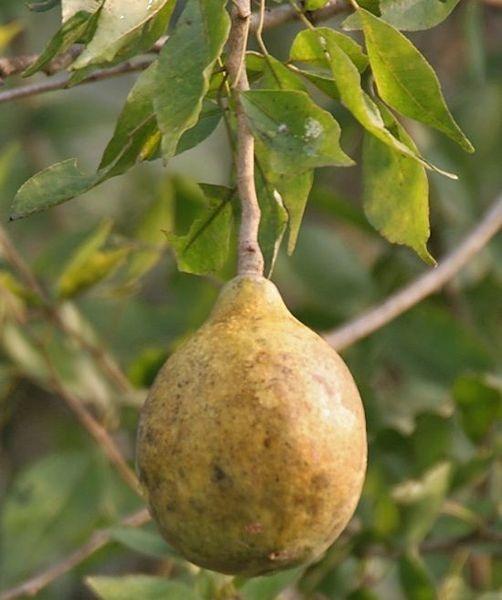 Интересные факты о фруктах. 59c3d3e07177