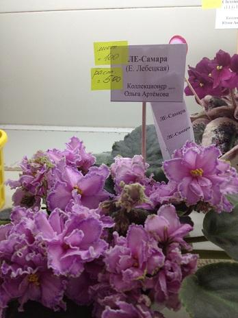 Выставка цветов - Страница 2 Bf05131c3441