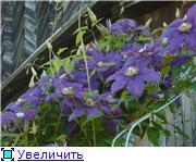 Цветущие лианы E0e7206b90f3t