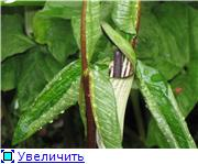 Растения для тени или Тенистый сад. D659fd81988ct