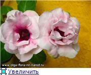 Выращивание глоксиний из семян 943f9dad8552t