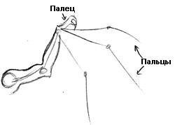 Рисуем крылья (урок) D6559e0345d9