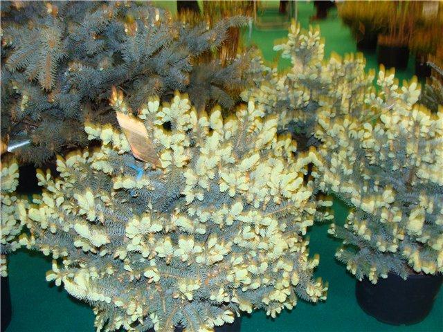 Международая выставка «Цветы.Ландшафт .Усадьба 2010» Астана - Страница 2 E9139930b298