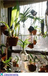 Размещение орхидей 1f759ddde78ft