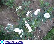 Specially for Karkela )))    Тестирование сербок и проч. 929a23e053bet