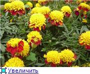 Наши домашние растения - Страница 2 853d8e93d4d2t