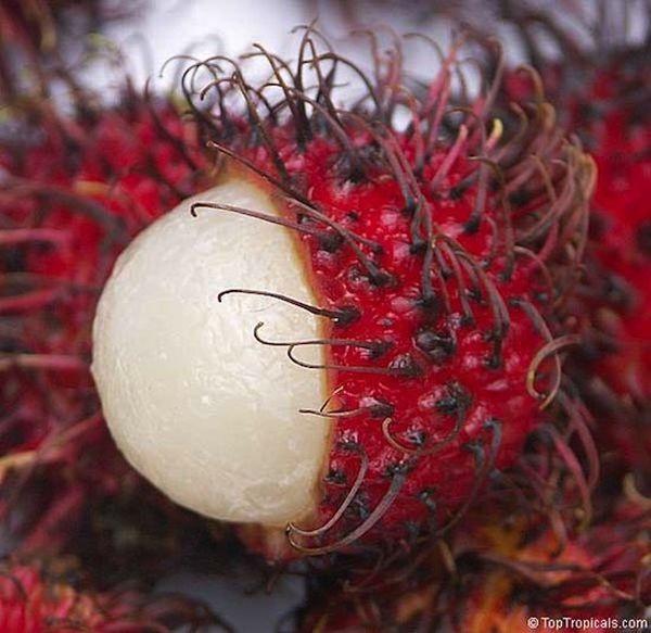 Интересные факты о фруктах. 1bc518da508e