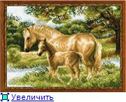 Риолис 2553a51b35d1t