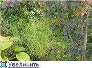 Cад Людмилы Ивановой из черкасс 11c62a9dc50et