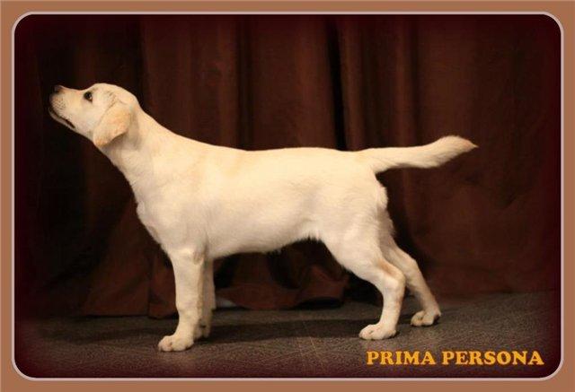 "Питомник ""Прима Персона"". Мои собаки-моя жизнь! 94aa4f60028b"