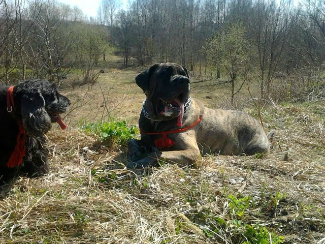 Наши собаки, друзья и гости, кот Мензурка - Страница 32 4af8b476302f