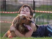 Можно ли завести собаку - Страница 2 967e512dc85at