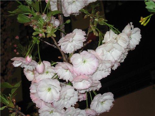 Ландшафт и приусадебное хозяйство - Весна 2009. - Страница 2 4a1b23b6478e