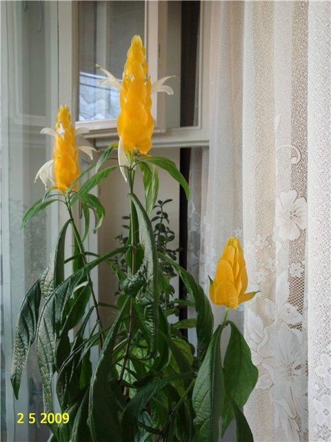 мои любимые цветочки F5851527fbe3
