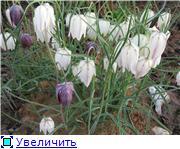 Весенне цветущие B32e81959593t