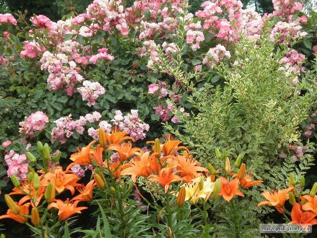 Крым. Никитский ботанический сад. - Страница 2 B354a32408b8