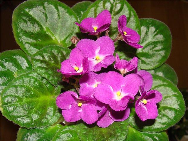 Весеннее  цветение (Хваст от Веры) - Страница 2 18e3f5a3927b