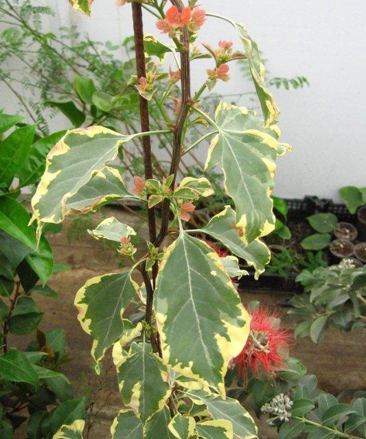 Растения из Нижегородской оранжереи 288048882273