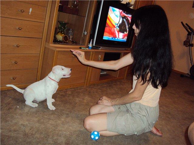 Собака-праздник! Сегодня и каждый день на арене Жоринька!!! 2dfe0b8f28e7