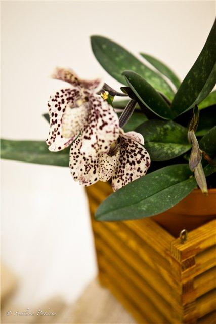 Выставка орхидей в Государственном биологическом музее им. К.А.Тимирязева 2f21a51a0d10