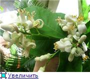 наши домашние цветники - Страница 2 Adf1cf8686e2t