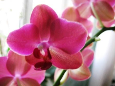 Разведение орхидей. - Страница 11 C879d2691ea1
