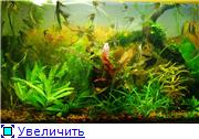 Мои аквариумы. 7e31a0a722cbt