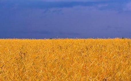 Размышления о флаге. Украинском... - Страница 2 46228216d2af