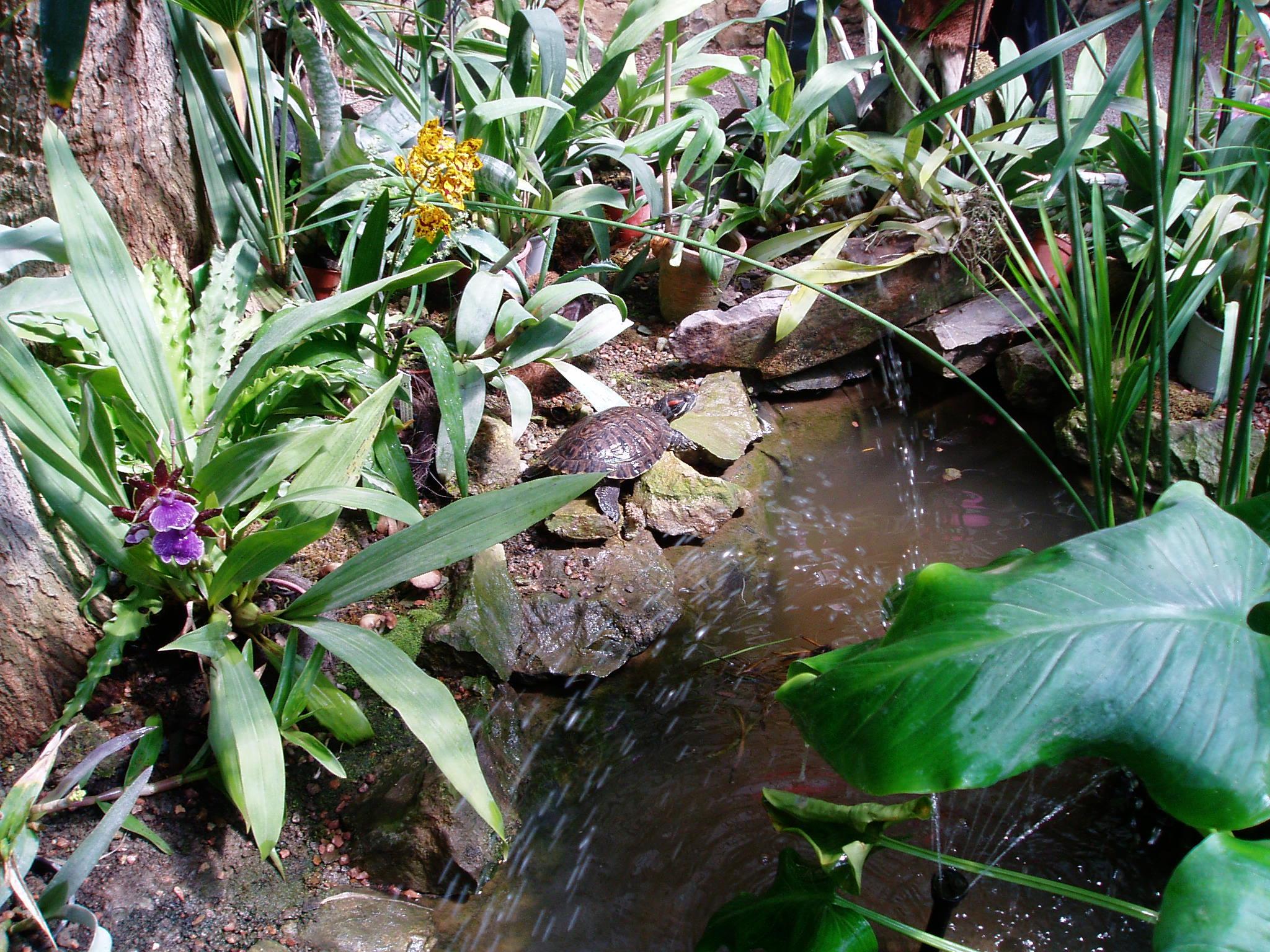 Выставка Орхидей 4e09feae3fe1